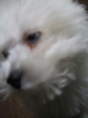 20080611ホワイトくん6