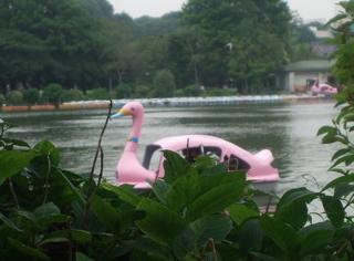 20080707上野公園不忍池のほとり3