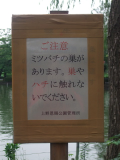 20080707上野公園不忍池のほとり6