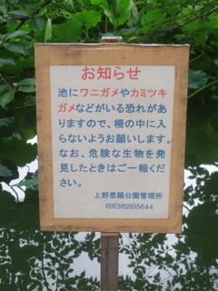 20080707上野公園不忍池のほとり8