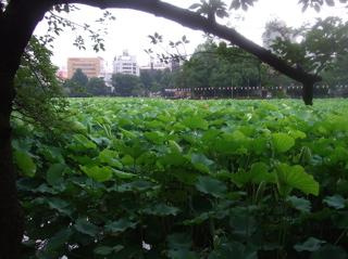 20080707上野公園不忍池のほとり9