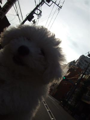 20080814早朝ビションちゃん1