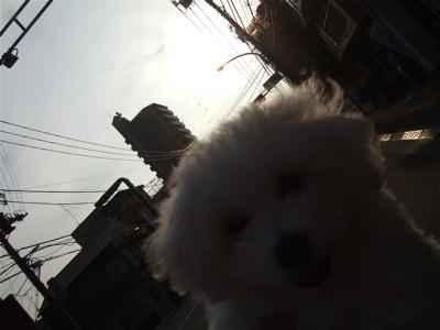 20080814早朝ビションちゃん2
