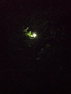 20080831深夜におさんぽ3