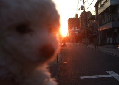 20081030きれいな夕焼けでちゅ…