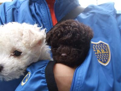 20081111ビションちゃん&ブラウンちゃん1