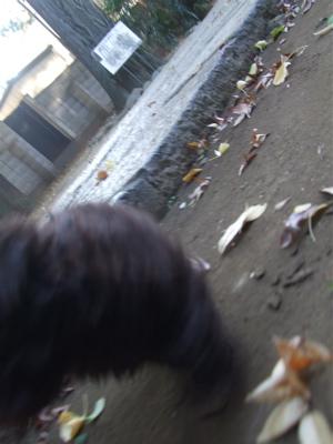 20081121かけっこ!6