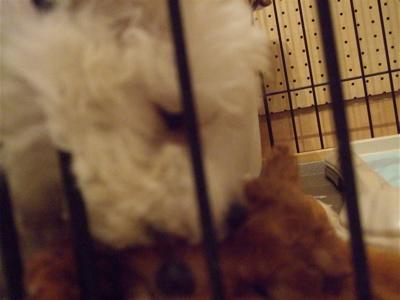 20081126ペロペロなかよし♪なかよしペロペロ♪1