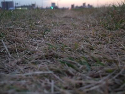 20081201荒川の土手夕焼け13