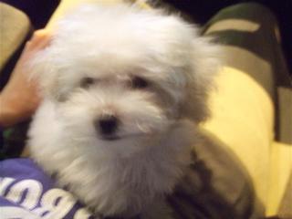 20081218ホワイトちゃん5
