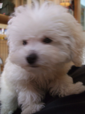 20081220ホワイトちゃん