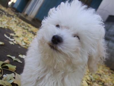 20081221ホワイトちゃん、初おさんぽ!7