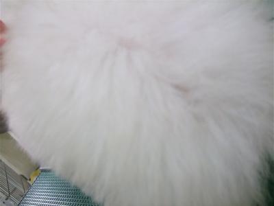 20081224ホワイトちゃん、初シャンプー♪3