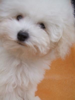 20081224ホワイトちゃん、初シャンプー♪4