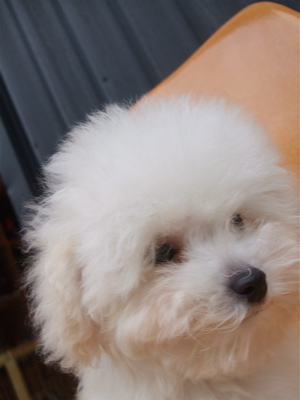 20081224ホワイトちゃん、初シャンプー♪6