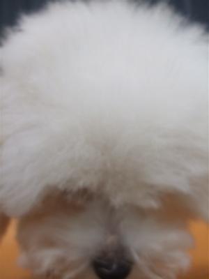 20081224ホワイトちゃん、初シャンプー♪7