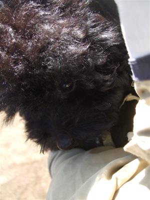20090307ブラックちゃん、お外へGo!8