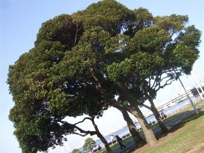 20090316横浜9