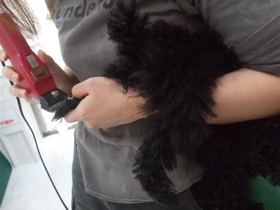20090322ブラックちゃん2