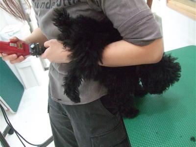 20090322ブラックちゃん3