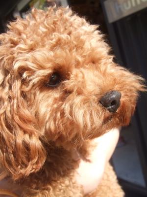 20090328迷い犬3