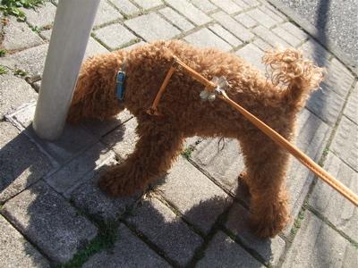20090328迷い犬8
