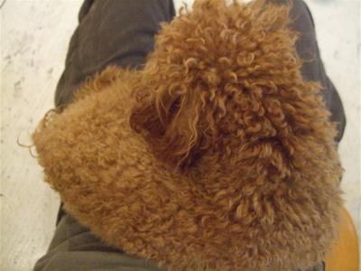 20090328迷い犬くん2