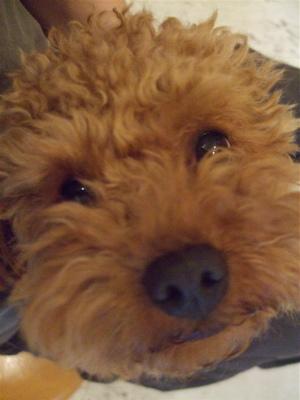 20090328迷い犬くん4