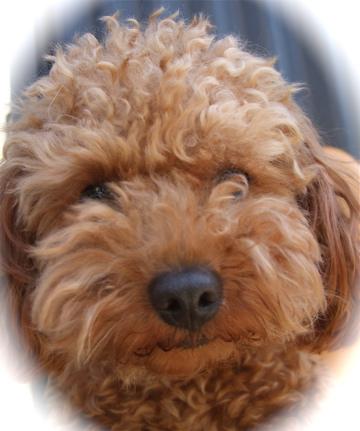 20090330迷い犬くん