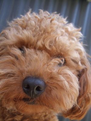 20090330迷い犬くん2