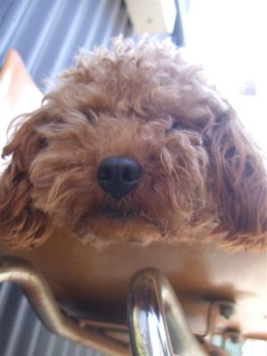 20090330迷い犬くん3