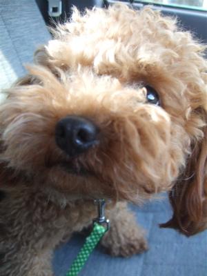 20090330迷い犬くん、荒川の土手へ1