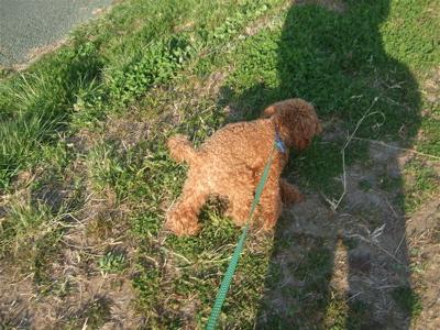 20090330迷い犬くん、荒川の土手へ3