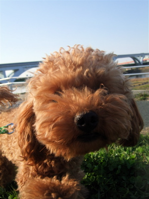 20090330迷い犬くん、荒川の土手へ4