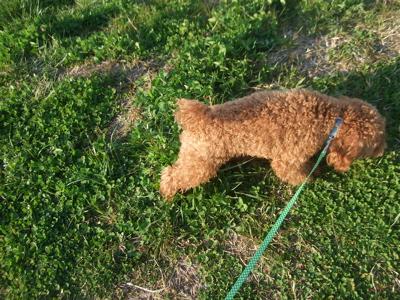 20090330迷い犬くん、荒川の土手へ5