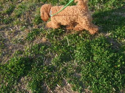 20090330迷い犬くん、荒川の土手へ6