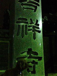 20090330迷い犬くん、吉祥寺へ1