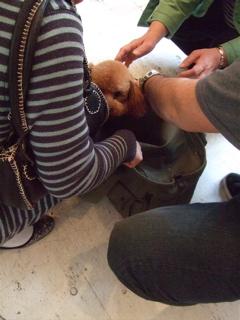 20090331迷い犬くん、旅立ち…