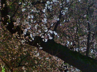 20090404上野花見3