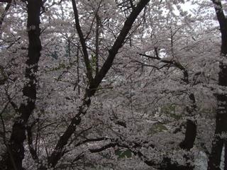 20090413-14旅58