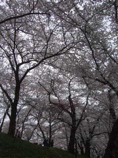 20090413-14旅62
