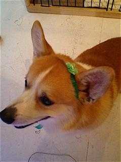 hundehutte2007-3