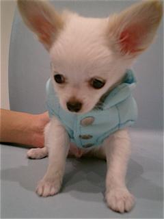 hundehutte2007-5