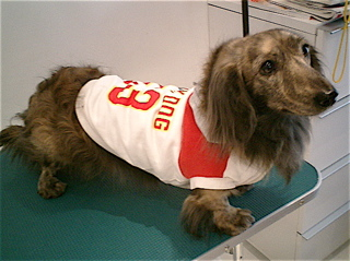 hundehutte2007-18
