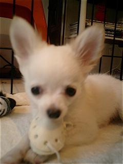 hundehutte2007-21