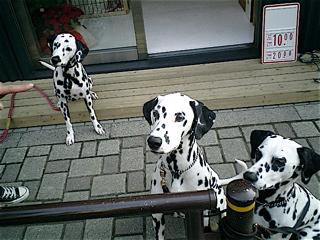 hundehutte2007-23