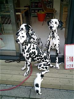 hundehutte2007-24