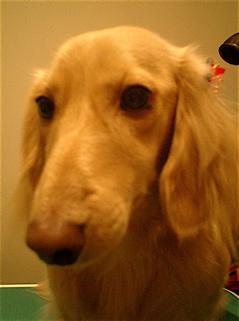hundehutte2007-26