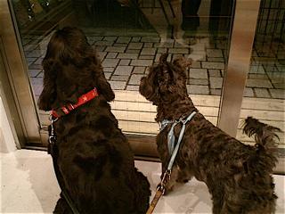 hundehutte2007-30