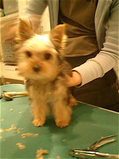 hundehutte2007-34